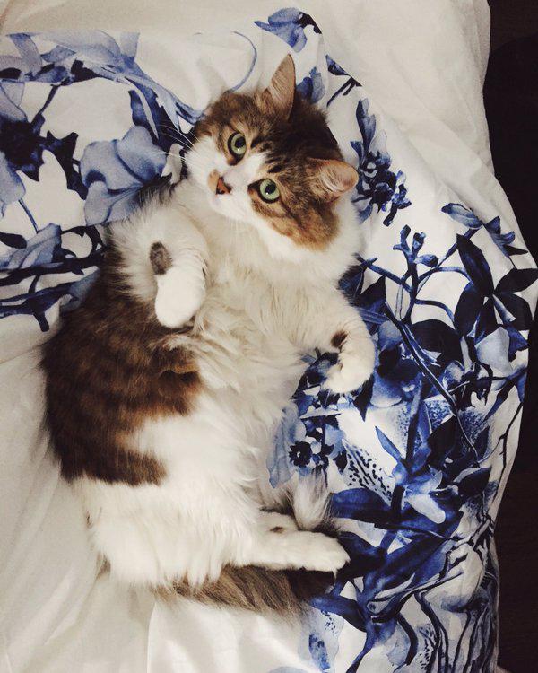 stephen_cat
